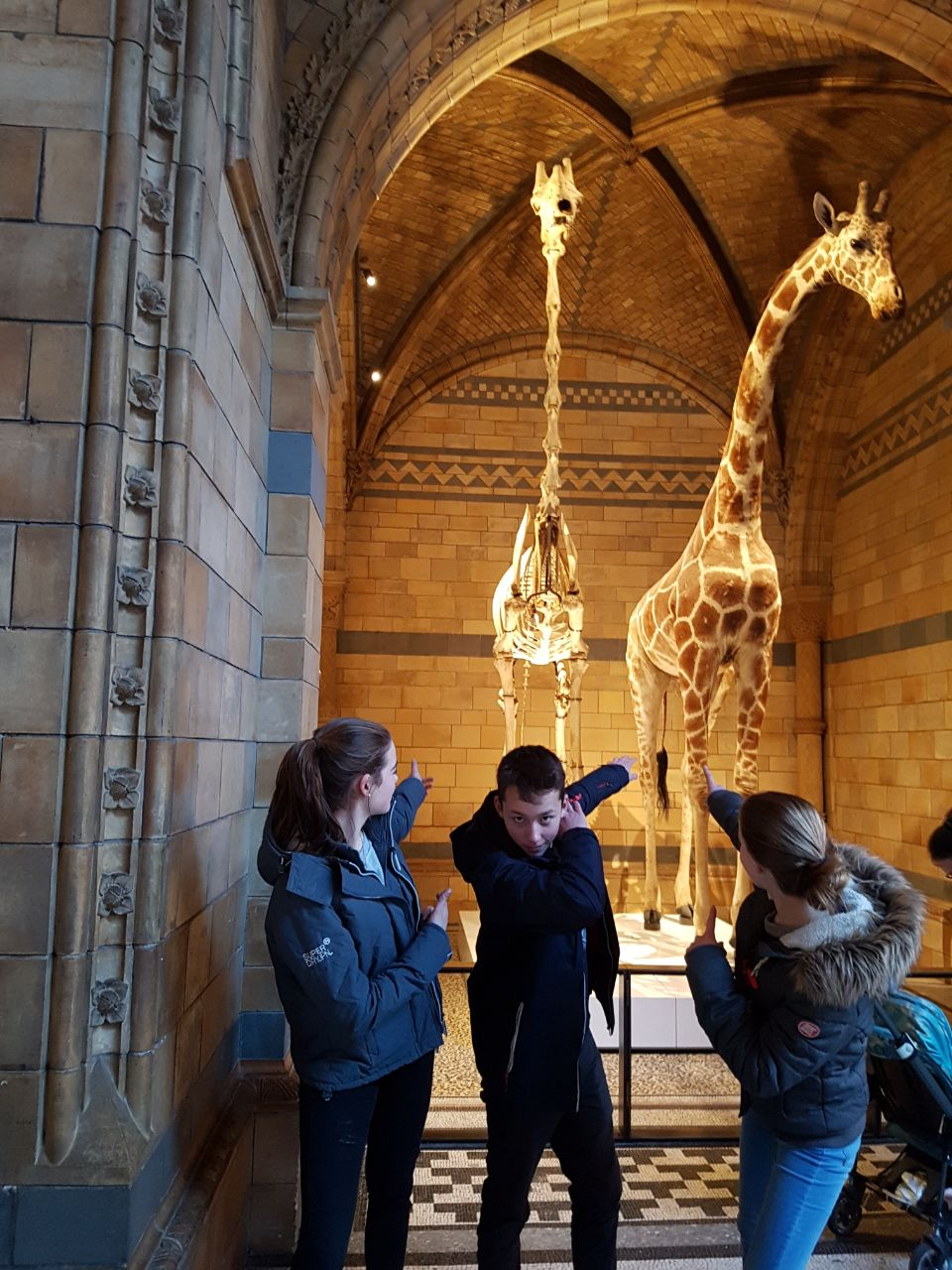 Natural History Museum IV
